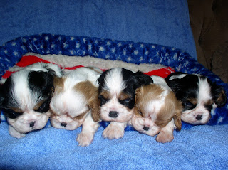 5 Puppies Sleeping