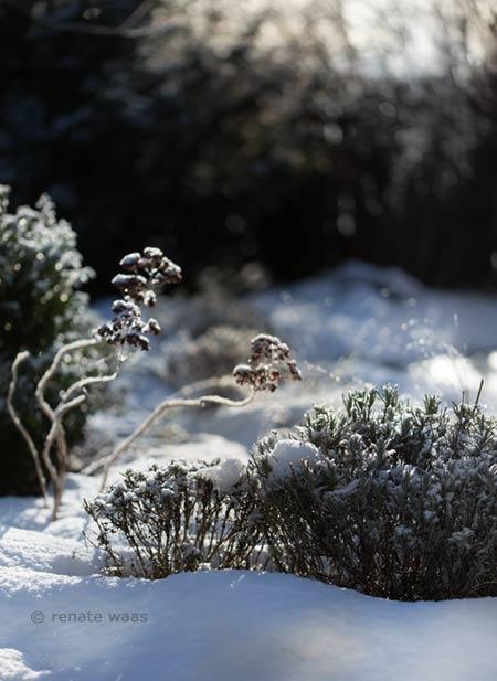 strukturstabile Pflanzen wie Lavendel, Sedum und viele Gräser geben dem Präriebeet auch im Winter ein attraktives Erscheinungsbild