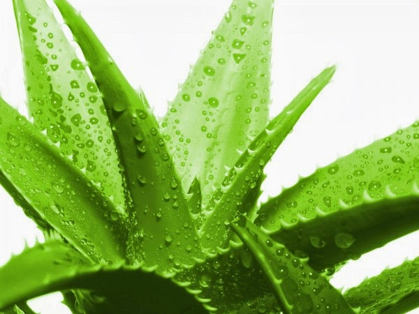 Five uses of aloe vera for hair