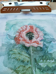 watercolour poppy