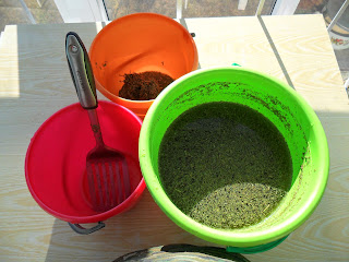 очистка семян салата от мусора