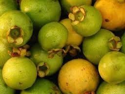 goji berry emagrece quantos quilos por semana
