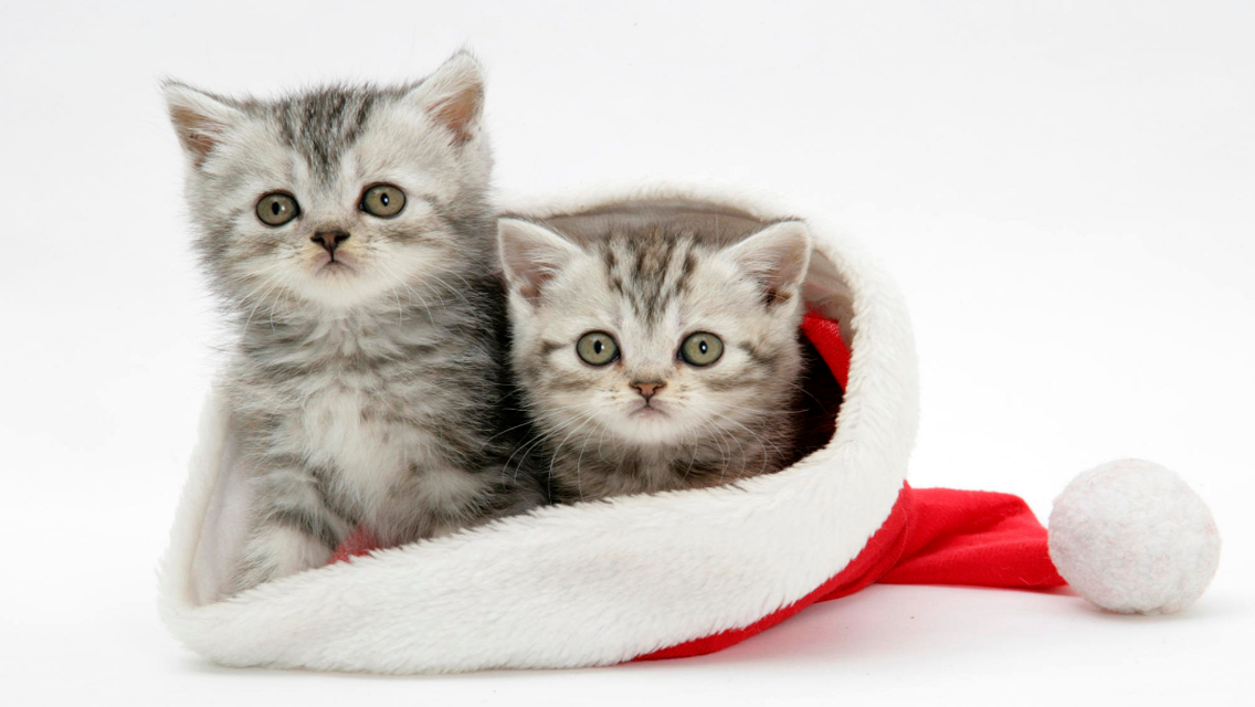 Christmas Cat Iphone Wallpaper Free Download Cute Christmas