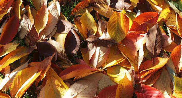Fuldt drøn på efterårets farver i haven