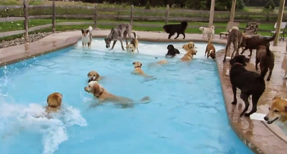 Canine Pool Party The Ark In Space