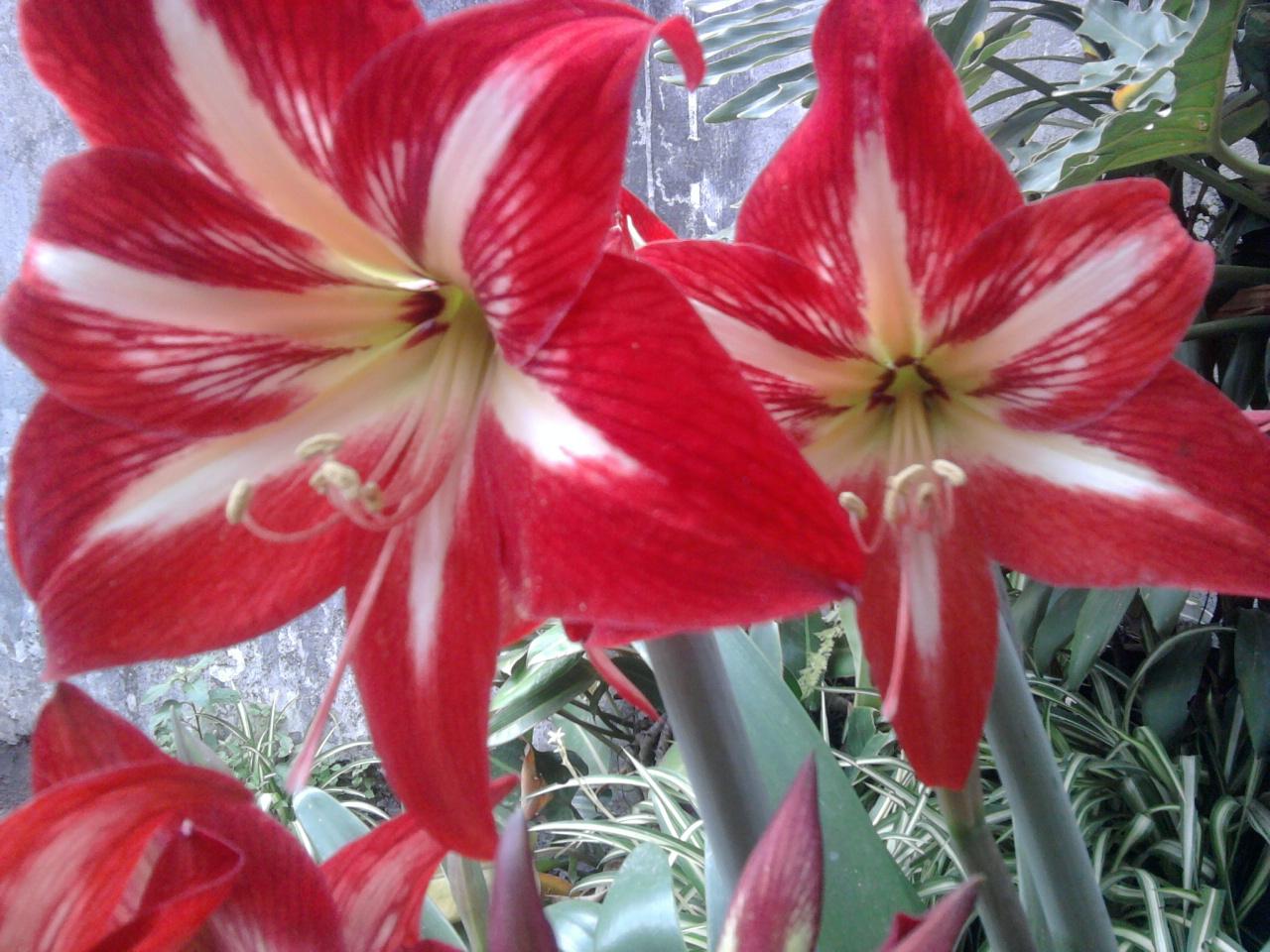 Las flores del jardín de mi madre