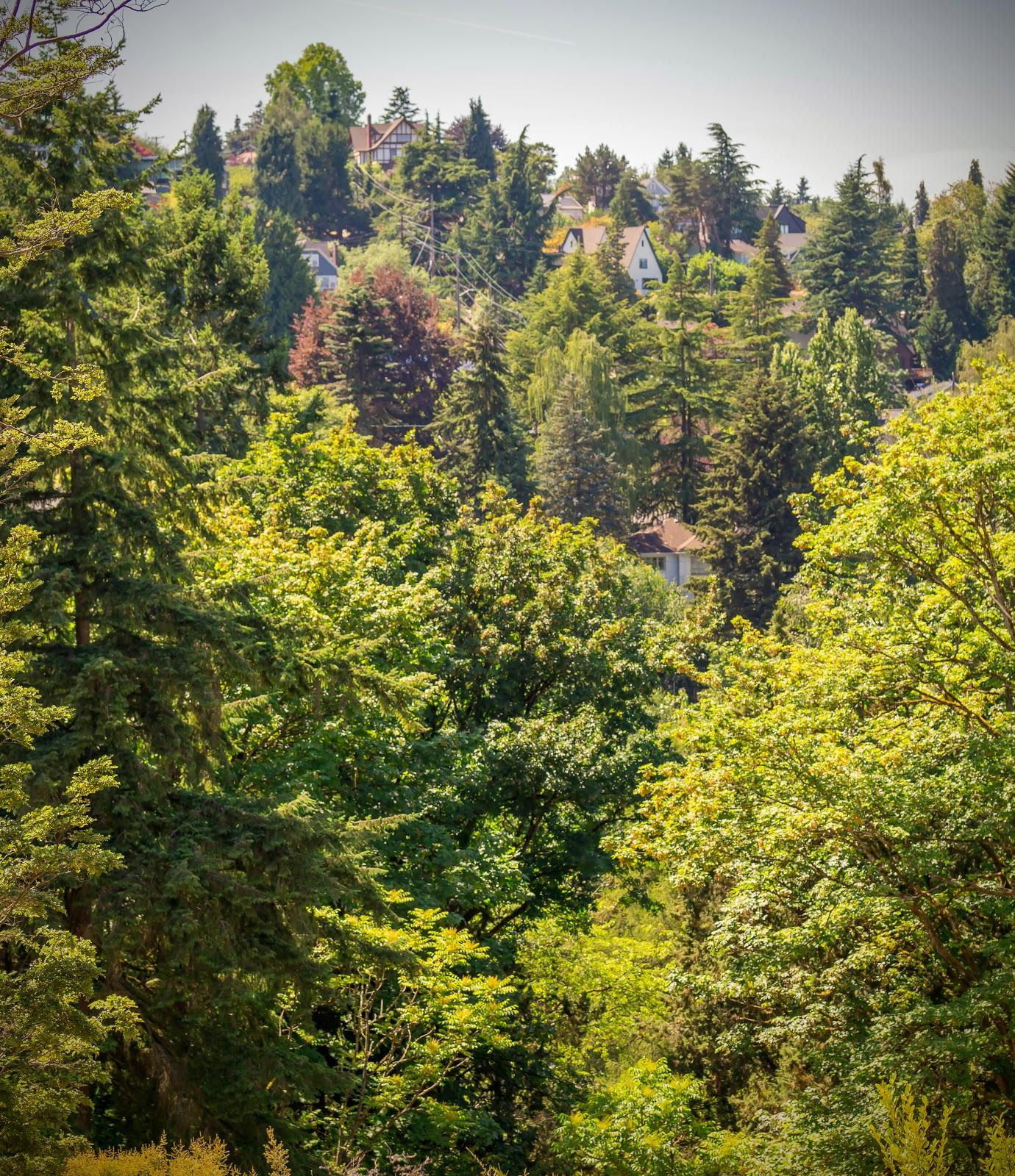 На соседнем холме, достаточно крутом, надо сказать, соревнуясь за вид на парк один над другим расположились домики.