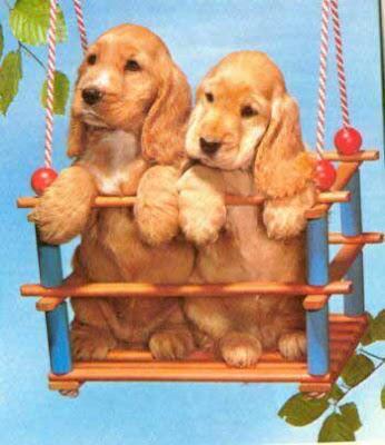 Imagenes de perritos enamorados