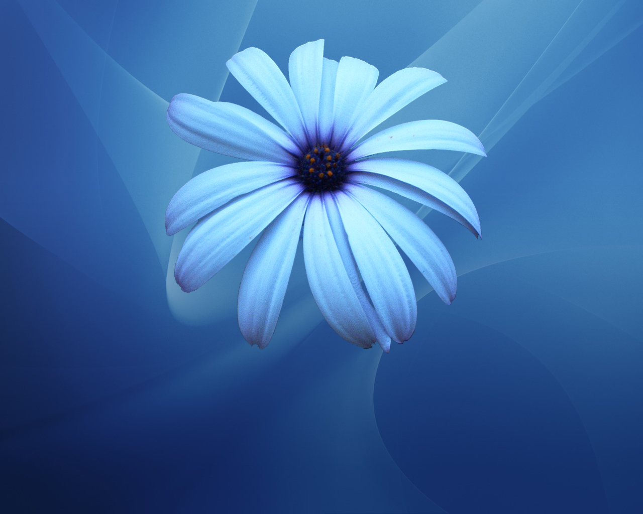 all photos gallery blue flower pictures picture of blue