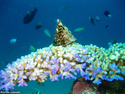 Gili Air, Indonesia, Hans Reef, reef scene