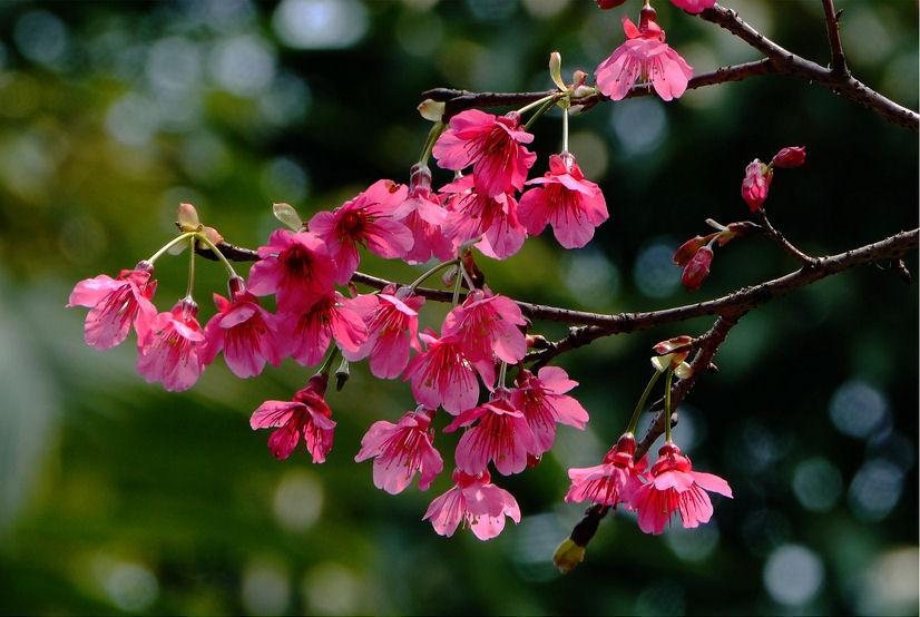 Fotos de flores bonitas - Imagenes De Flores Naturales Bonitas