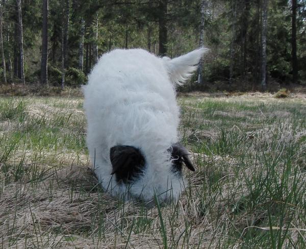 mullsork