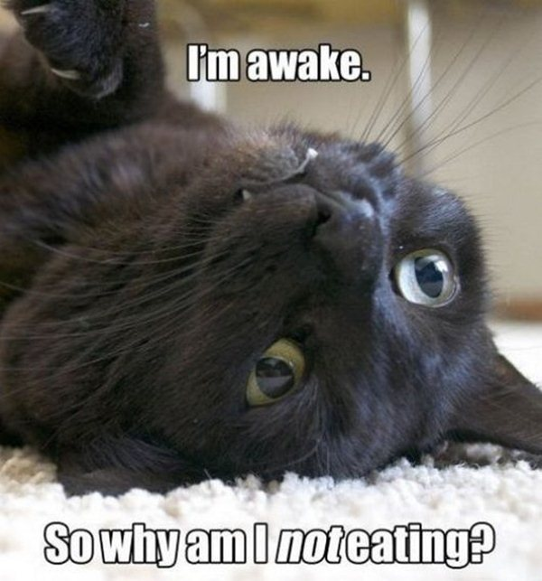 animal pictures with captions, lolcats, i'm awake