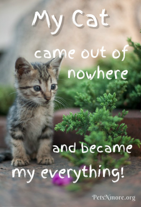 Cat Quotes Mesmerizing Pets N More Top Cat Quotes