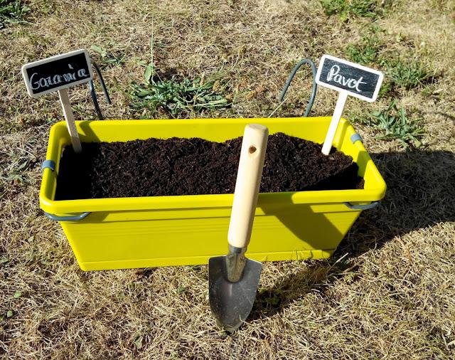 jardinière, Plante des Graines, fleur, pavot, Gazania, bullelodie