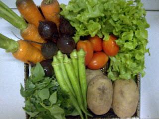 alimentação saudável, eventos, orgânicos, sustentabilidade, agrotóxicos,