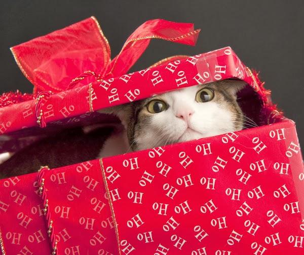 Картинки по запросу cat in box gift