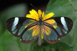 mariposa alada sobre flor