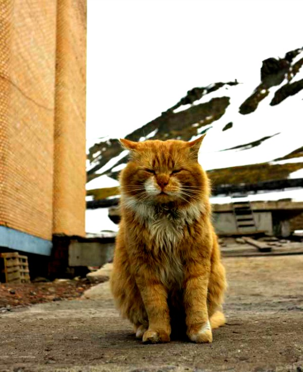 barentsburg cat