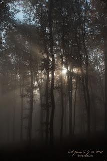Köd (fog)
