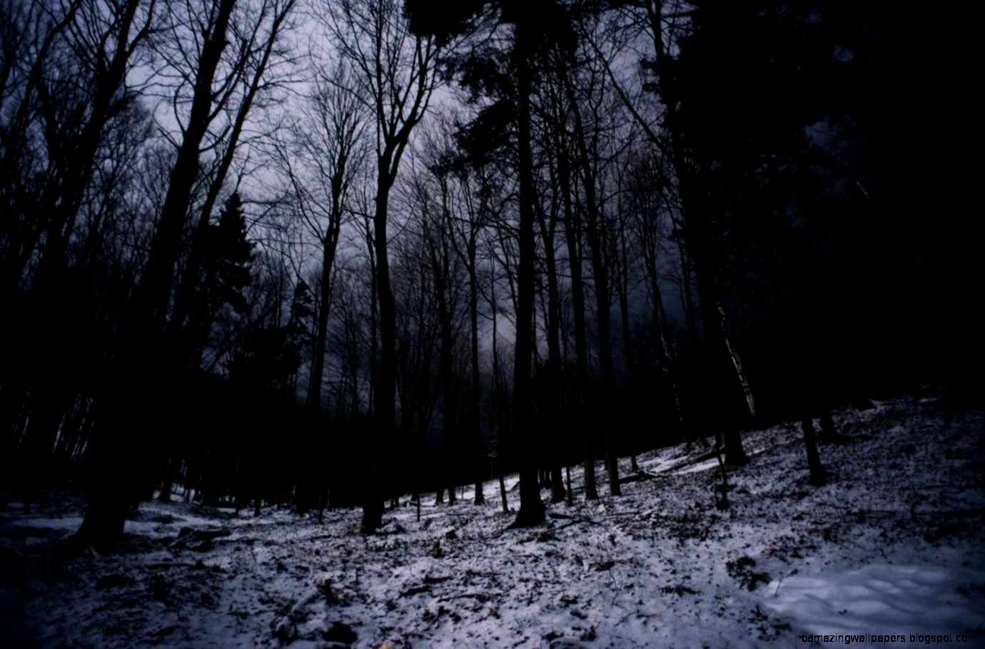 landscapes winter trees dark night forest Canada christian