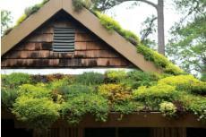 Suculentas no telhado