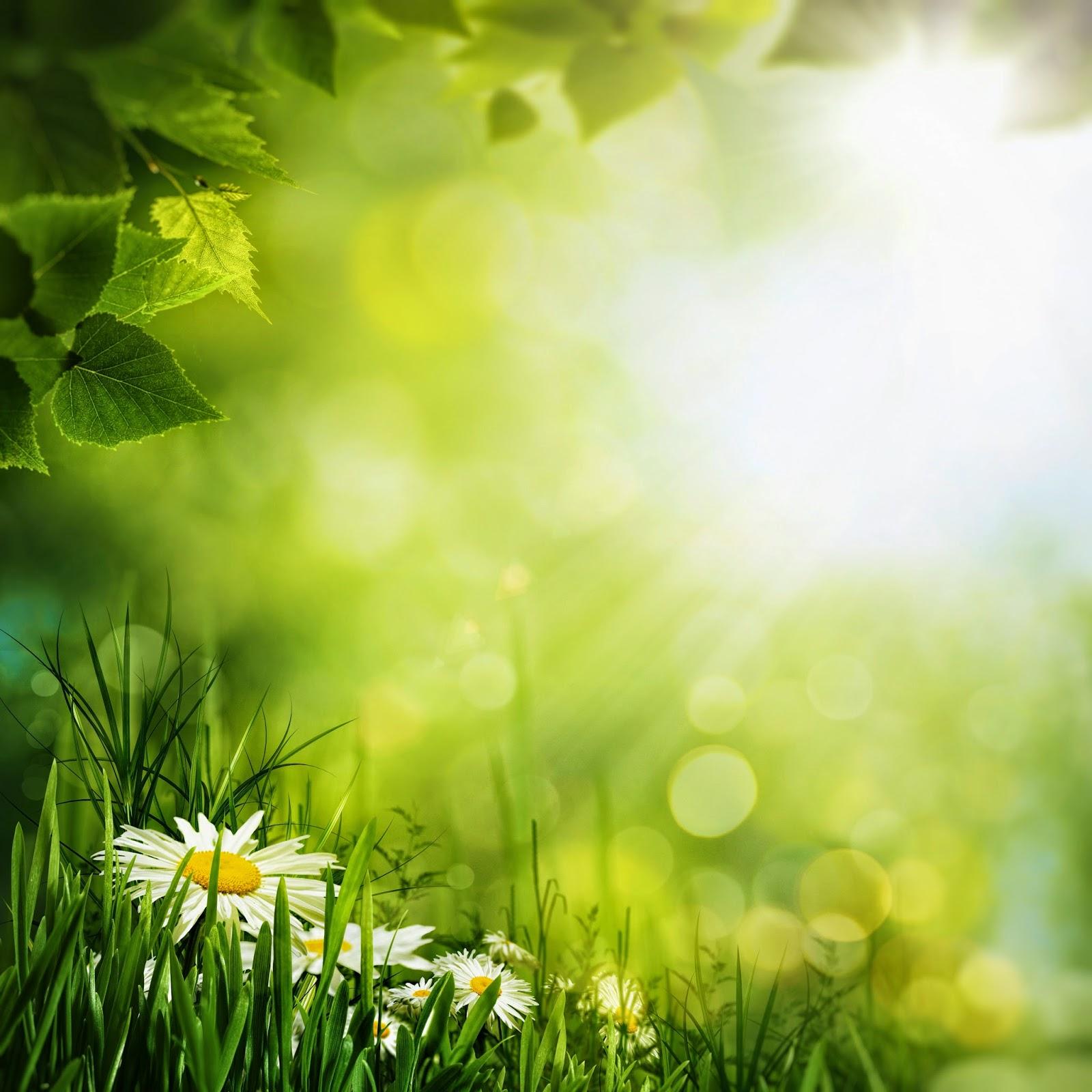 Imagenes fotograficas imagenes bonitas de flores para for Imagenes nuevas para fondo de pantalla