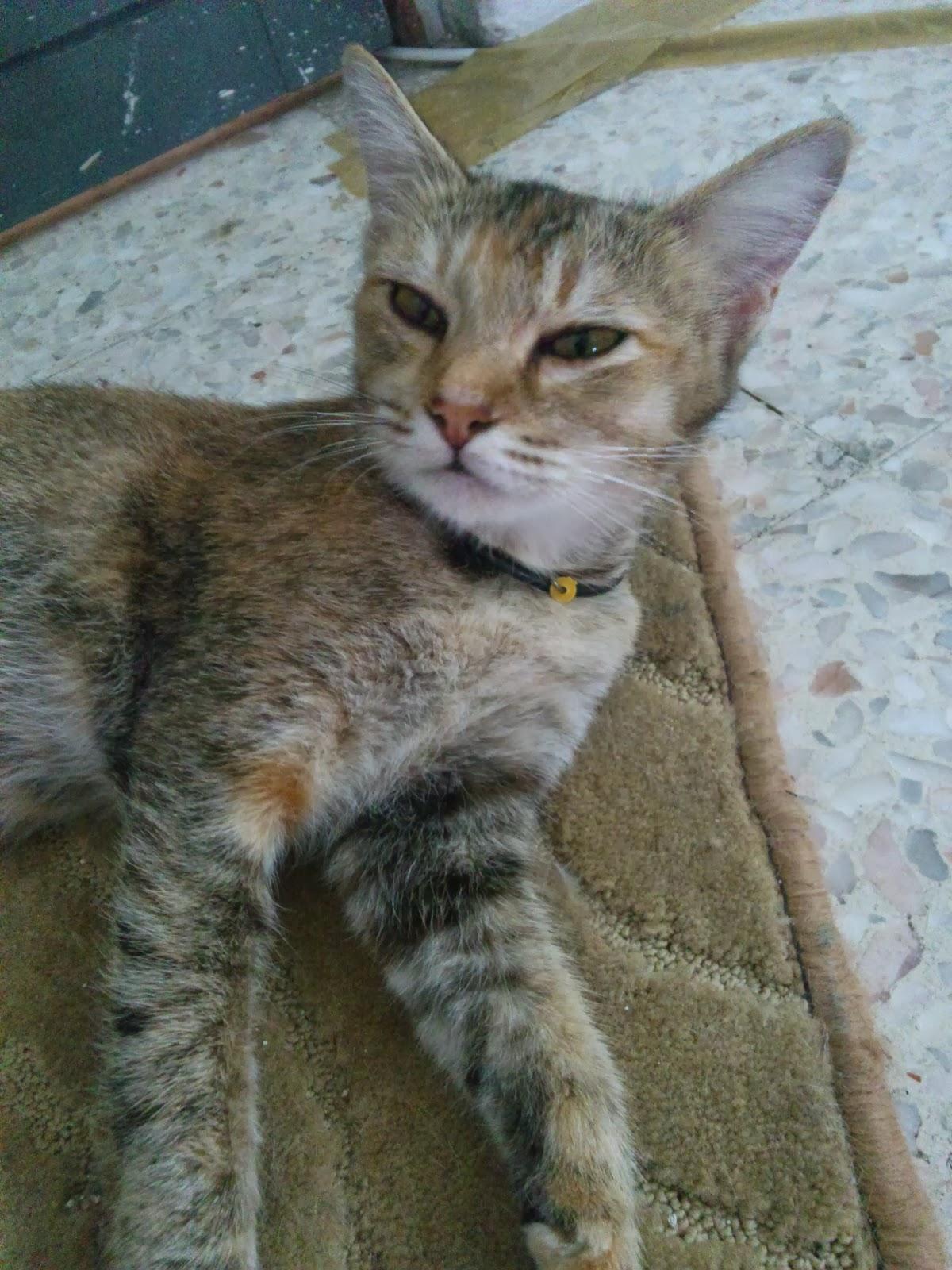 Rumah Kucing90b Ahli Baru