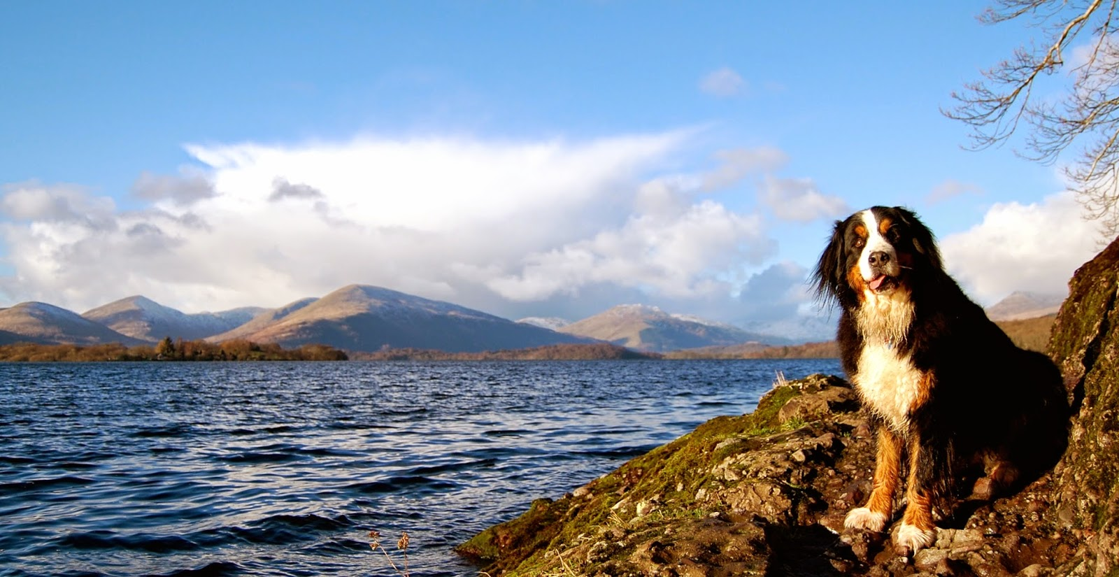 Mattie on the Banks of Loch Lomond
