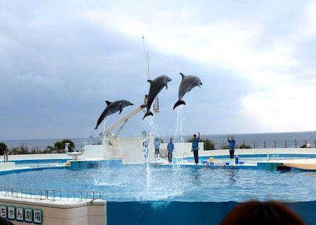 Ocean Expo Park, Dolphin