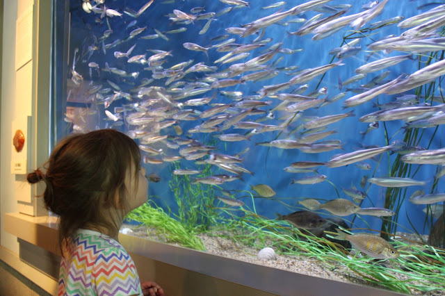 Oregon Public Aquarium : The Blakeys: Oregon Coast Aquarium