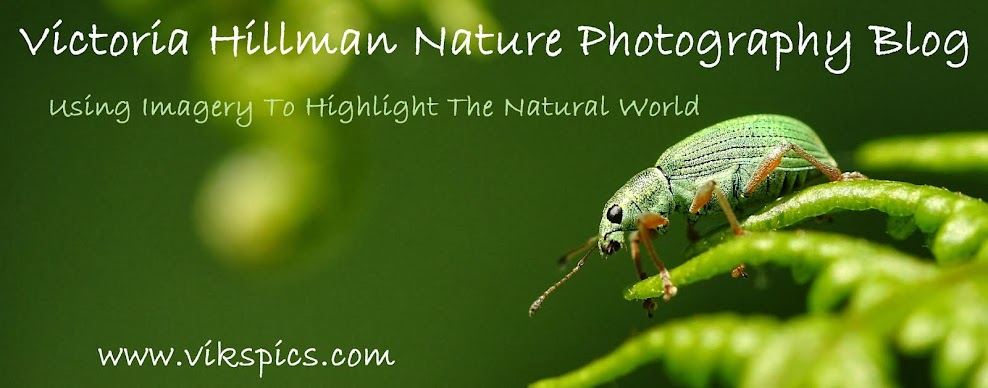 Victoria Hillman Nature Photography Blog