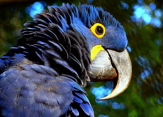 Top 10: aves do Pantanal
