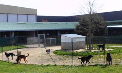 Sân chơi của chó trong SPA
