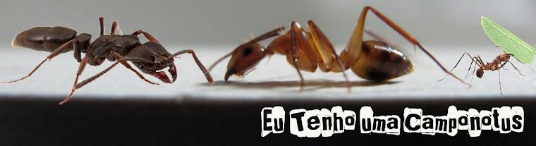Eu tenho uma Camponotus