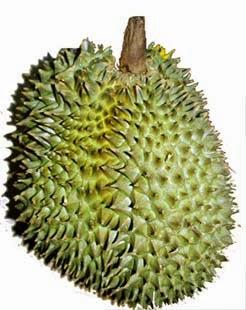 Bahaya buah duren untuk bumil