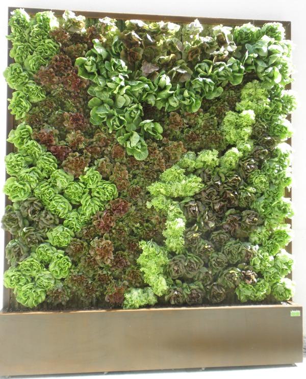 Jardines verticales y cubiertas vegetales enero 2012 for Jardines verticales de exterior
