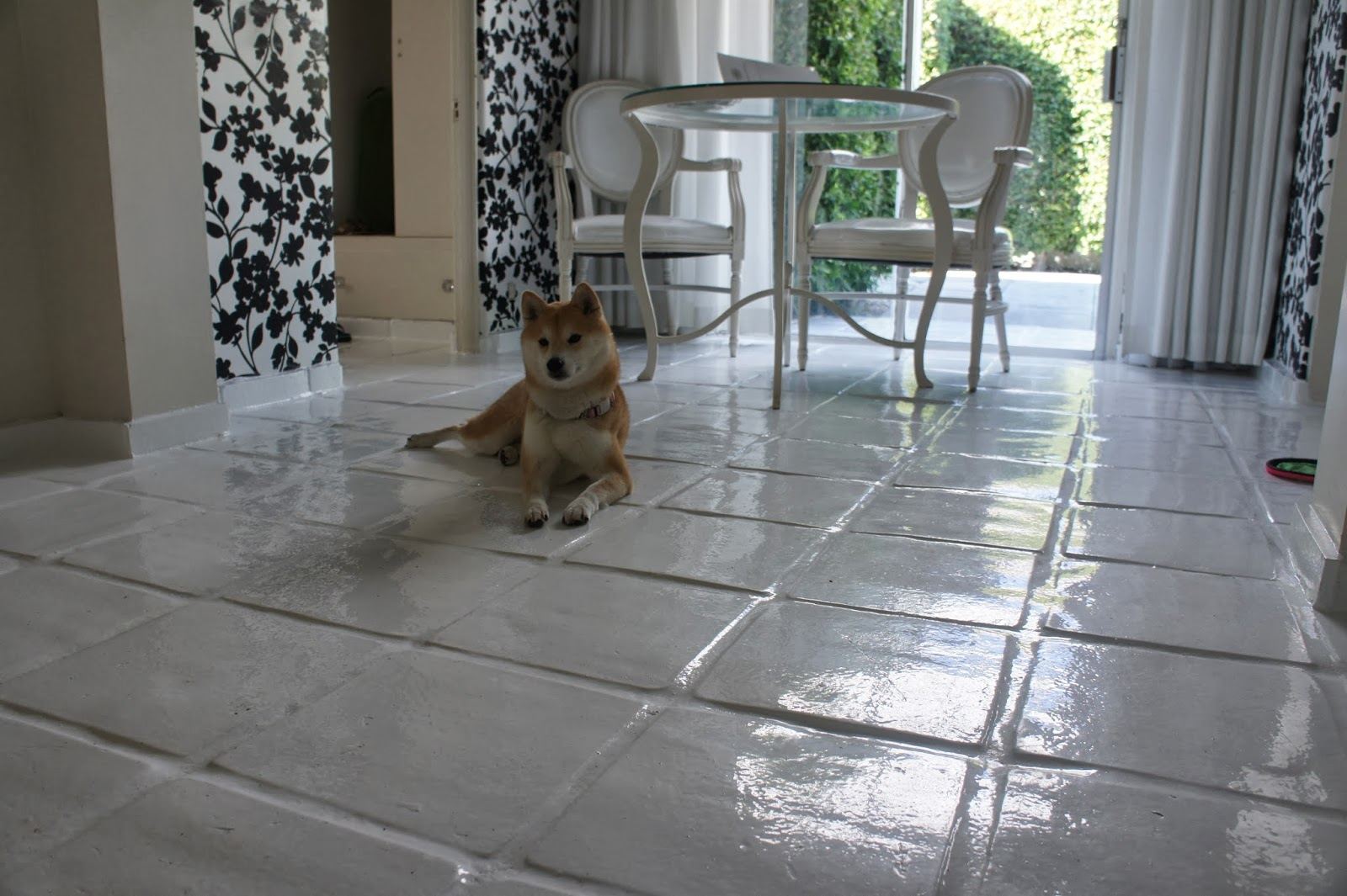 Fully Enclosed Dog Parks Surrey Newton
