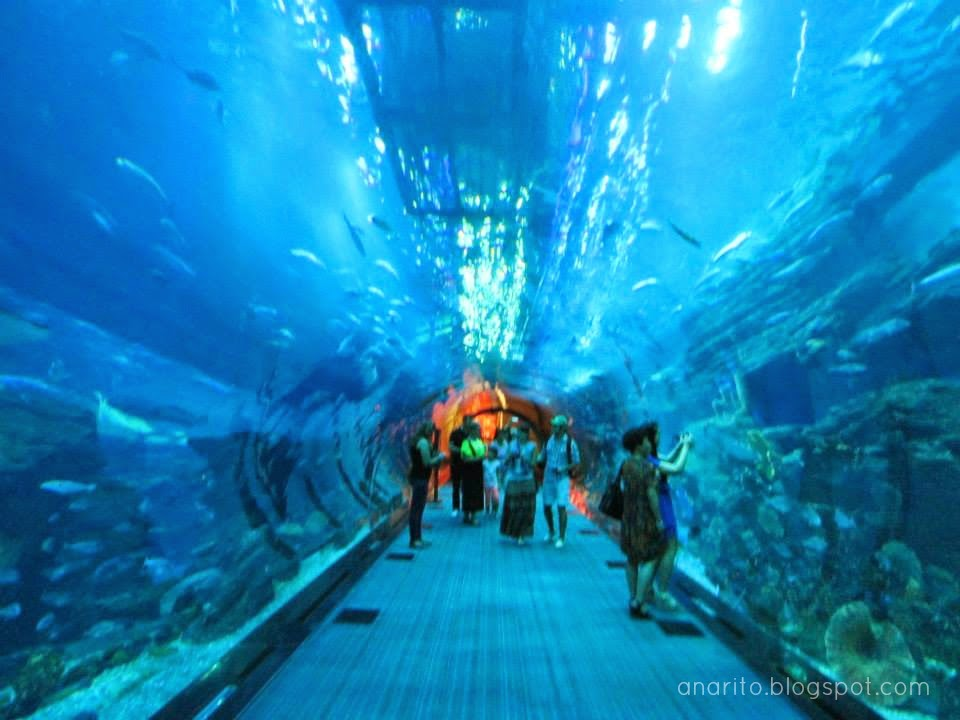 Tunel Dubai Aquarium and underwater zoo