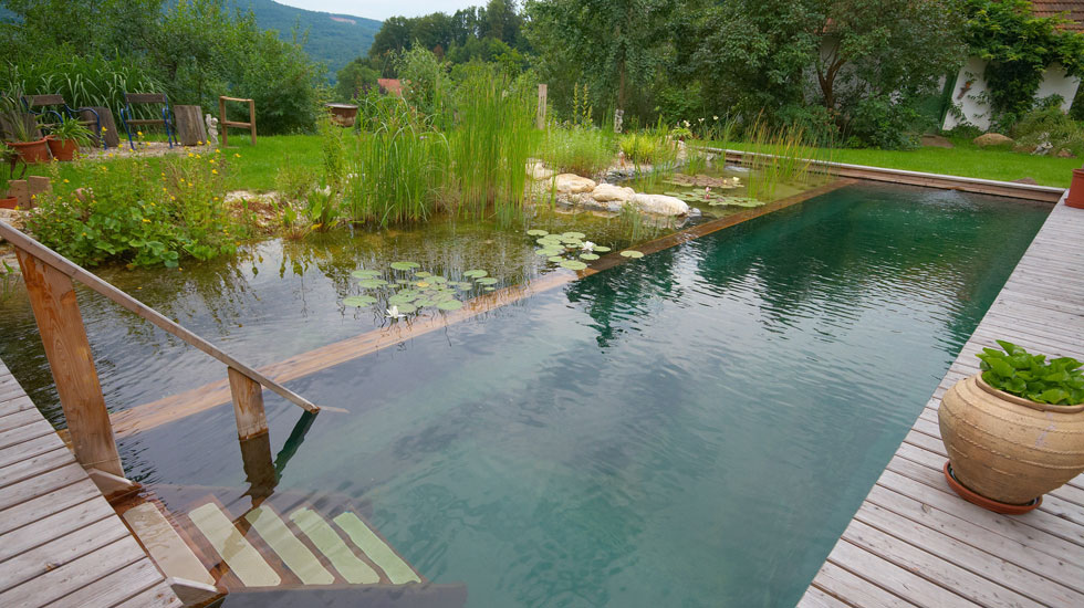 Byzantineflowers organic natural swimming pools for Piscine biologique prix