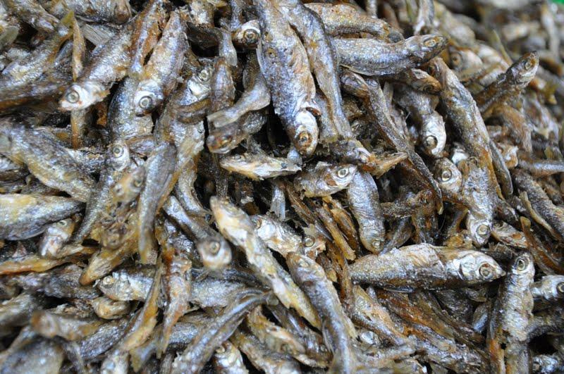 Menikmati Gurihnya Ikan Bilis Di Danau Singkarak