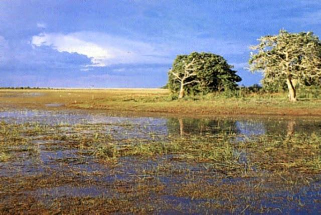Wisata Alam Taman Nasional Wasur Merauke