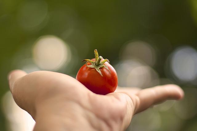 Manfaat Tomat Untuk Kecantikan