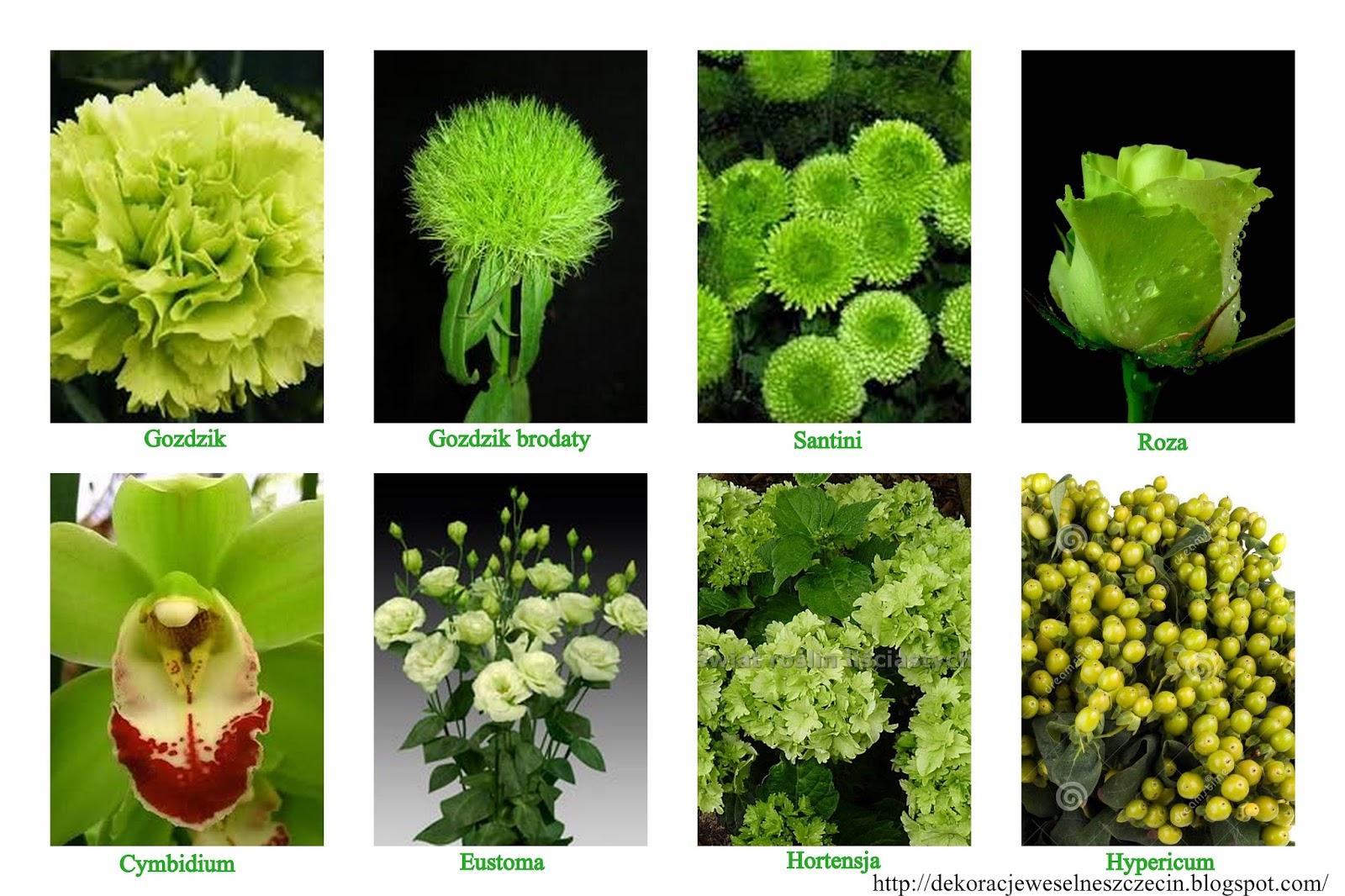 zielone kwiaty na ślub