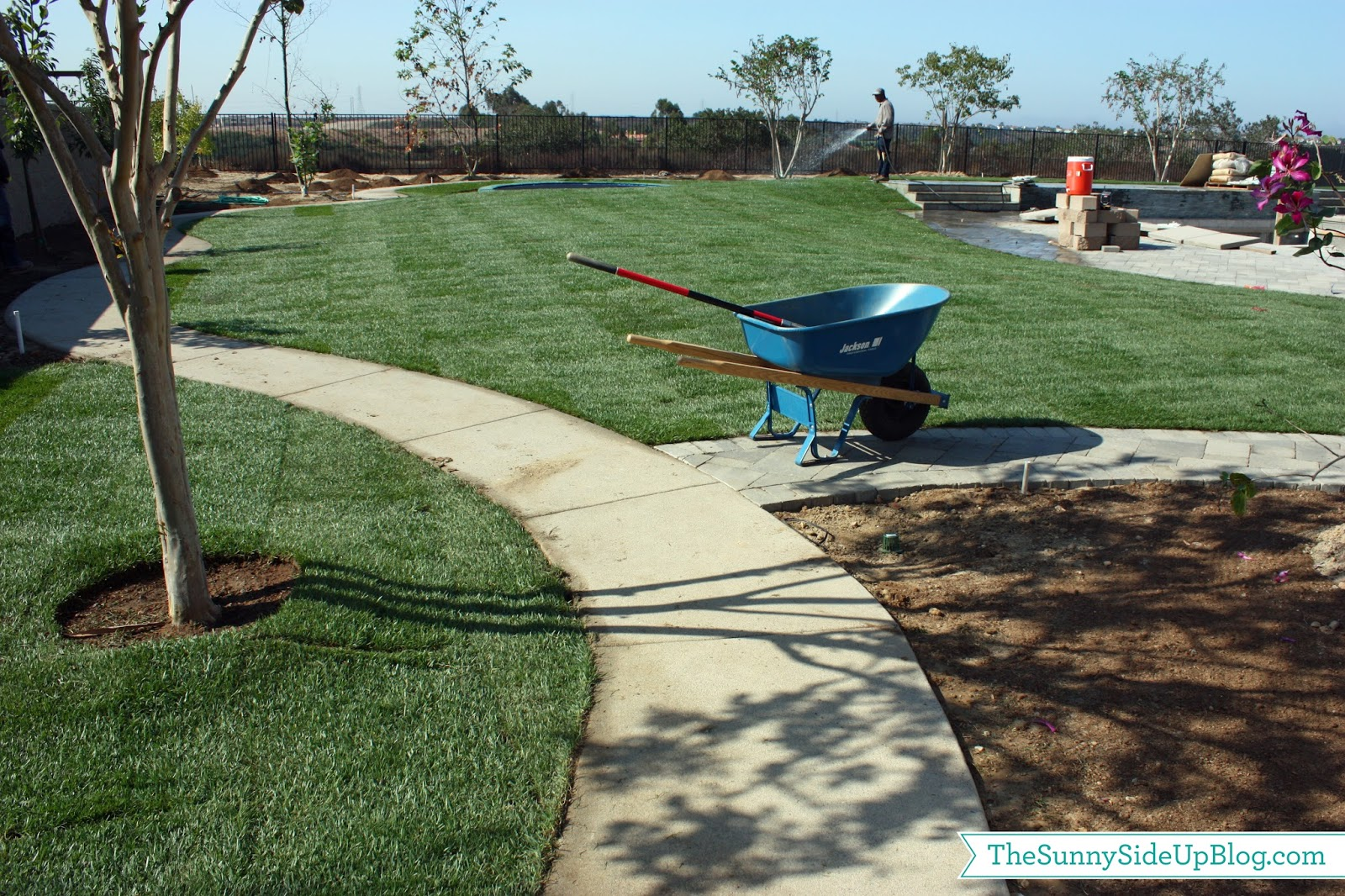 Backyard grass the sunny side up blog for Cleaning concrete paths