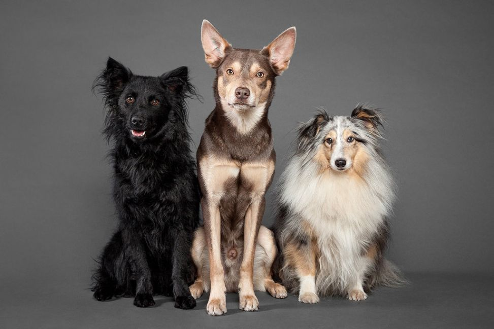 Dogs Photography by Oszkar Daniel Gati