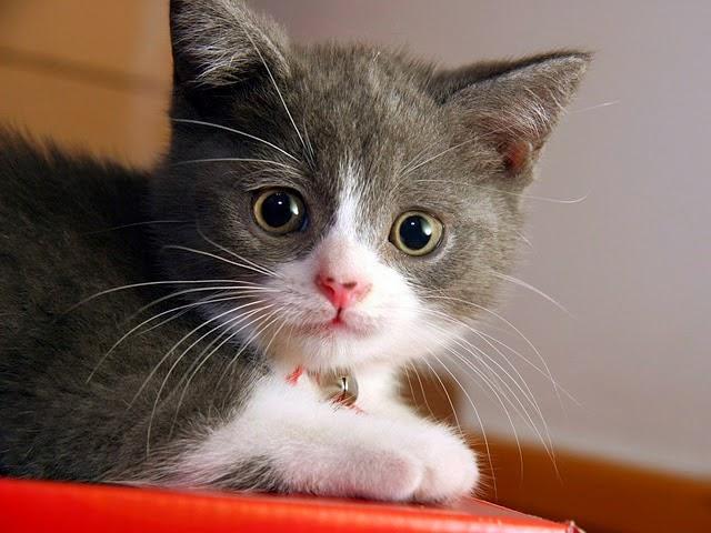 Kisah Sedih Ibu Kucing Dan Anaknya Dihumban Dari Tingkat 9