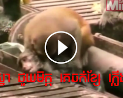 Incredible Moment Hero Monkey Saves Pal's Life After Fellow Primate is Electrocuted