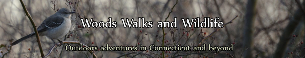 Woods Walks and Wildlife