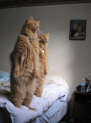 two cats standing alert